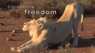 Download Sanbona Wildlife Reserve, near Cape Town, South Africa Video