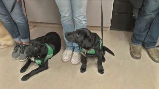 Download Local FFA students raise puppies for Guide Dogs for the Blind Video