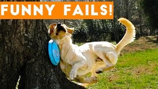 Download TRY NOT TO LAUGH at FUNNY PET FAILS 2017 | Funny Pet Videos Video