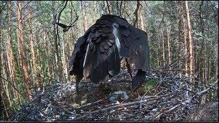 Download Must-toonekurg~A unwanted visitor~14:17- 14:39 Short version Video