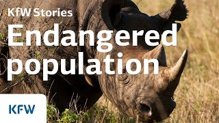 Download Rhinoceros poaching in South Africa Video