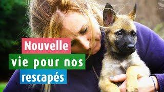 Download Une nouvelle vie pour nos rescapés Video