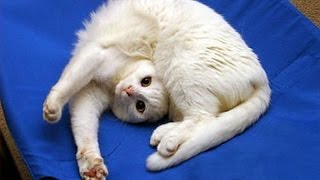 Download Funny CATS will always make you laugh - Funny cat compilation Video