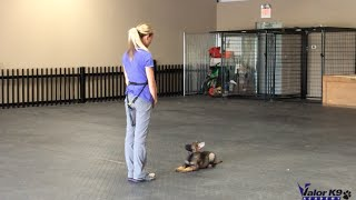 Download German Shepherd puppy obedience training | 9 weeks old | Valor K9 Academy, LLC Video