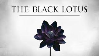Download The Black Lotus Video