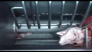 Download زيارة لأحد مصانع اللحوم Video