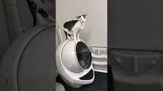 Download Teddy honking at the litter robot for no reason! Video