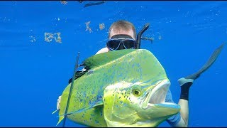 Download Spearfishing for Bull Dolphin {Catch Clean Cook} Gourmet Dorado Fingers Video
