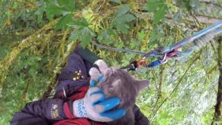 Download Two cats rescued from SAME tree by Canopy Cat Rescue Video