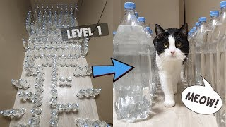 Download Mission Impossible. Bottle Maze With Water For The Cat. 3 Levels Video