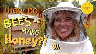 Download How do Bees make Honey? | Beekeeping with Maddie #13 Video
