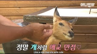 Download Deer follows the man around like his pet dog Video