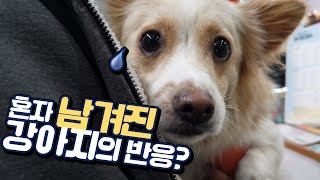 Download 주인만 찾는 강아지를 애견카페에 홀로 두었더니.. Video