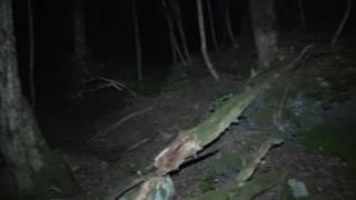 Download Aokigahara , Solo Ghost Hunt, Suicide Forest Japan.. Part 1 Video