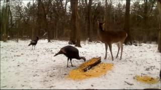 Download December Turkey Visit Cam Two Video