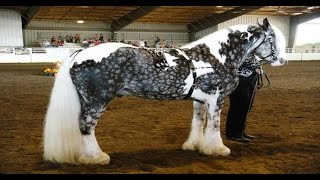 Download top 10 most beautiful horses in the world Video