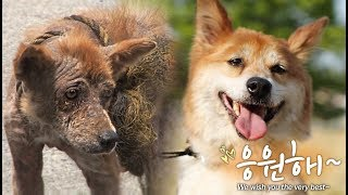 Download The formerly called ″Hyena″ dog due to its hideous appearance.. Video