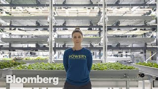 Download This High-Tech Farmer Grows Kale in a Factory Video