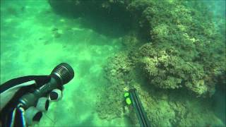 Download صيد هوامير 2 Spearfishing grouper Video
