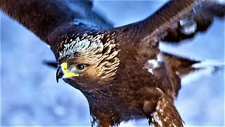 Download 20 Largest Birds of Prey Video