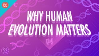 Download Why Human Evolution Matters: Crash Course Big History 204 Video
