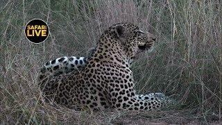 Download safariLIVE - Sunset Safari - April 16, 2019 Video