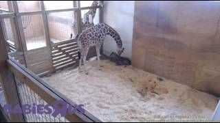 Download April's baby is trying to get up and walk Video