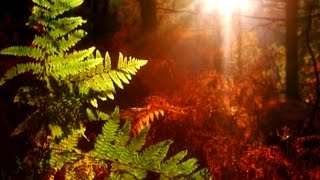 Download Trees & Forest: Echoes of Nature Relaxation with Music & Nature (Trailer) Video