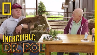 Download Wallaby Good - Season 4, Episode 8   Coffee Break with Dr. Pol Video