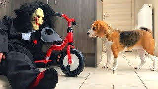 Download Dogs Vs Jigsaw Prank : Funny Dogs Louie and Marie Video