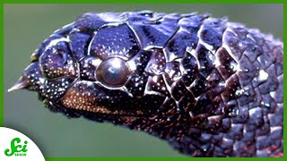 Download 7 Animals That Evolved at Hyperspeed — Because of Us Video