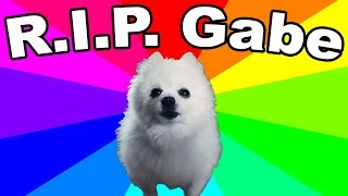 Download Gabe The Dog Died! REMEMBERING THE BORK KING (Thoughts and Tribute) Video
