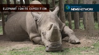 Download Facing Extinction: an encounter with the last male northern white rhino Video