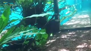 Download Trilha submersa - Novo episódio - Recanto Ecológico Rio da Prata Video