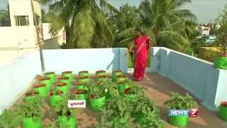 Download How to Grow Vegetables in a Container or Pots on the Terrace | Poovali | News7 Tamil Video