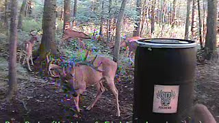 Download Live Deer Cam Video