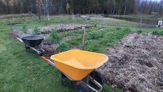 Download Carrot & Beet Harvest #148 Heirloom Organic Vegetable Garden Video