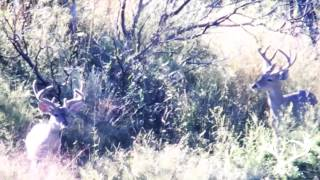 Download 151″ COUES DEER KILL SHOT!!!! RIO SONORA OUTFITTERS Video