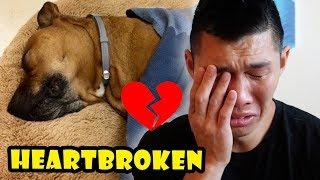 Download HEARTBROKEN OVER DOG NEWS: Goodbye Bentley    Life After College: Ep. 572 Video