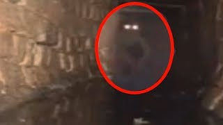 Download 5 Mysterious Creatures Caught On Camera & Spotted In Real Life! Video