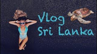 Download VLOG Sri Lanka. Пляж Хиккадува. Кормим ГИГАНСКИХ ЧЕРЕПАХ. Едем в центр островаю Video