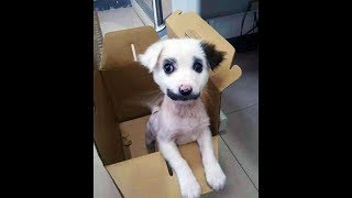 Download He Thought He Brought Home A Puppy, But Later Realized It Was Something Else. Video