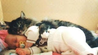 Download Cats and Babies ★ Cat Meets Baby for First Time (HD) [Funny Pets] Video