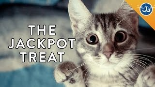 Download How to Communicate with Your Cat Using Treats! Video