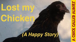 Download Lost my chicken - (A Happy Story) Video