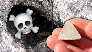 Download Mystery Treasure Pet Gravestone Cicada Holes & Rats Eat Fluffy Cats Food Video