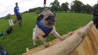 Download Muddy Dog Challenge Windsor 2016 Video