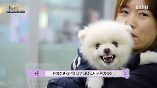 Download 강형욱의 세상에 나쁜 개는 없다 E24 180216 엄마 껌딱지 카스의 홀로서기 720 Video