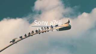 Download SONY a7sii in 4k with Rokinon lens Video