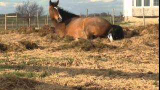 Download Sassafras - A Baby Horse is Born Video